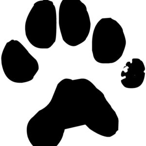 Dog Pawprint Lettering Art 15 0 Wall Decal